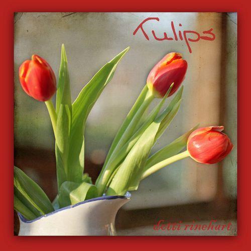 Tuliptrio-1