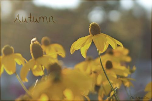 Autumn-copy
