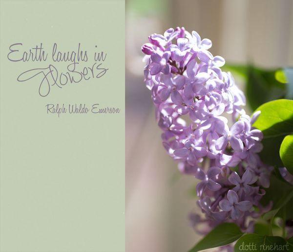 Lilacs-copy