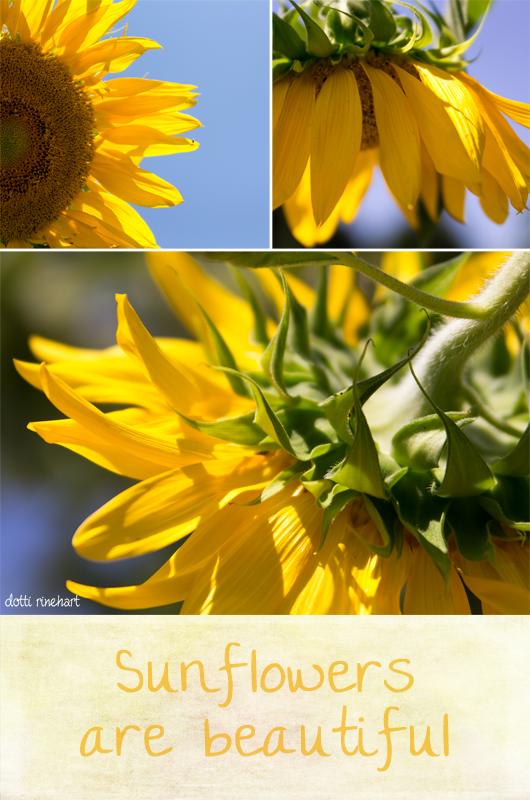 Sunflowerdip