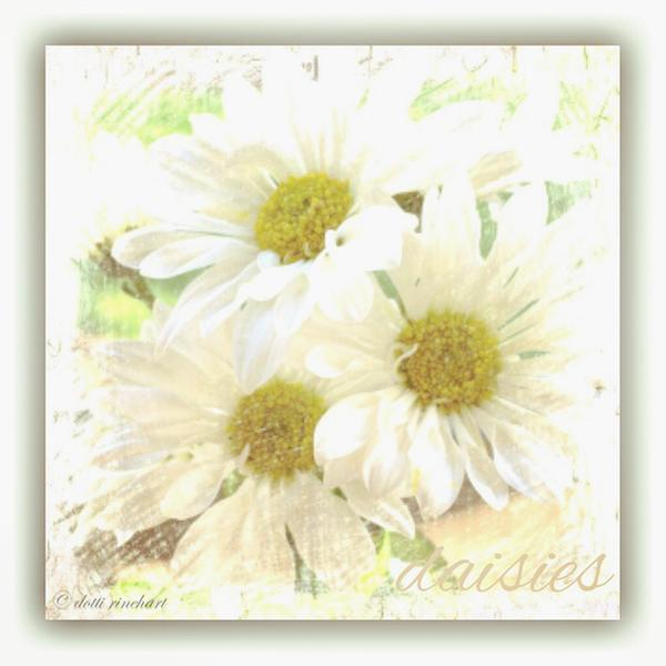 Daisies-2-Edit