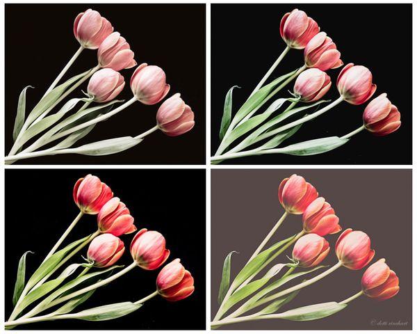 Tulipmosaic2-web