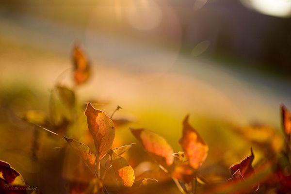 Morning-light-fall