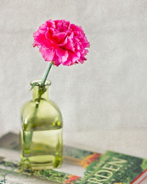 Carnation-web
